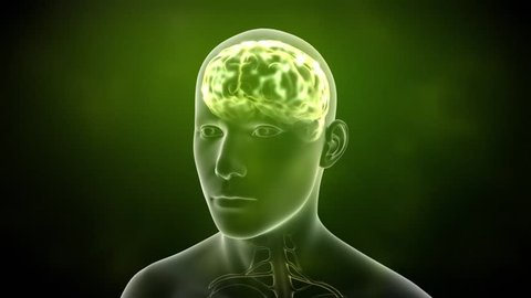 Neuronal Activity Male Green Conceptual animation showing neuronal activity in the human brain.