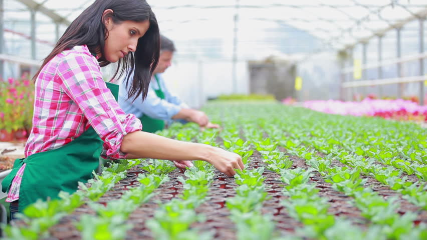 Qualifications for working in a plant nursery best idea for Gardening qualifications