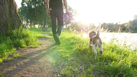 Young beagle dog walk at path along lake shore with owner, sunny evening time, slow motion tracking shot. Camera follow man with juvenile companion. Happy moments concept, charming sunny scene