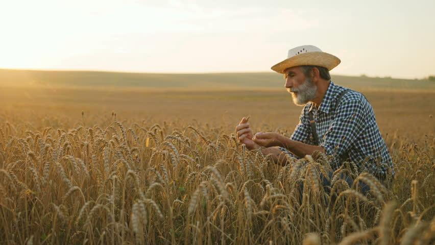 Field Wheat Agriculture Farmer Farm Harvest Rural Crop -7865