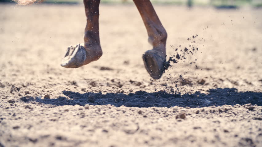 Horse hooves galloping in slow motion close up 4K. Long shot of horse hooves in focus while running in riding arena sand. Parts of sand flying behind.