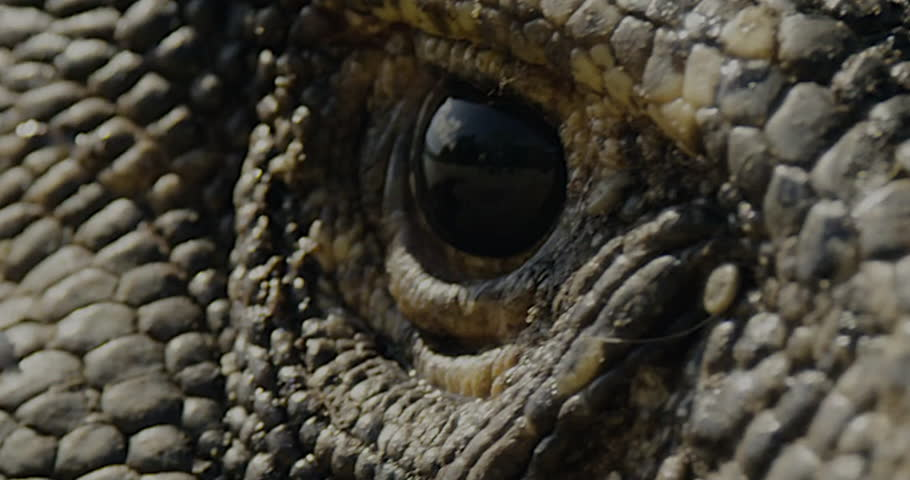 Close up view of a Dragons eye watching you as his head moves back and forth - seamless looping.