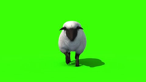 Black Sheep Walkcycle Front Green Screen 3D Rendering Animation