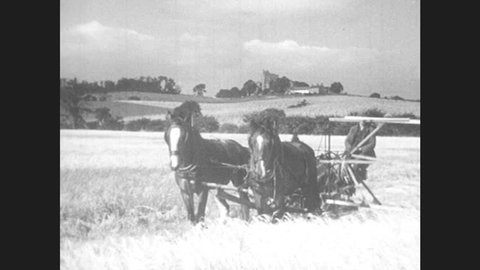 1940s: UNITED KINGDOM: horses pull machine in field. Ladies and children collect potatoes in field. Dairy cows on farm land.