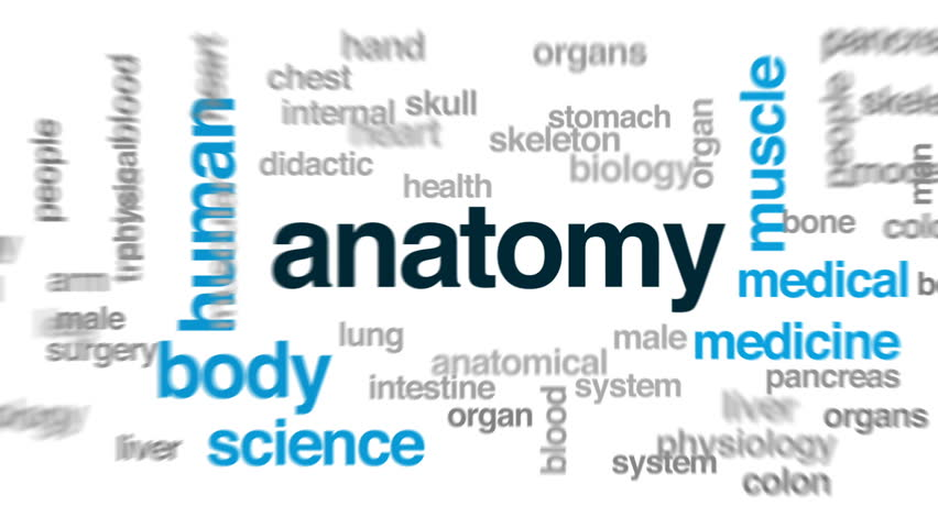 Stock Video Clip Of Anatomy Animated Word Cloud Text Design