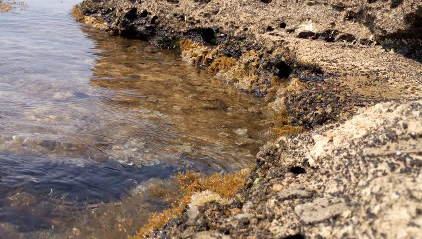 BLACK SEA SHORE WAVES   Shutterstock HD Video #30524416