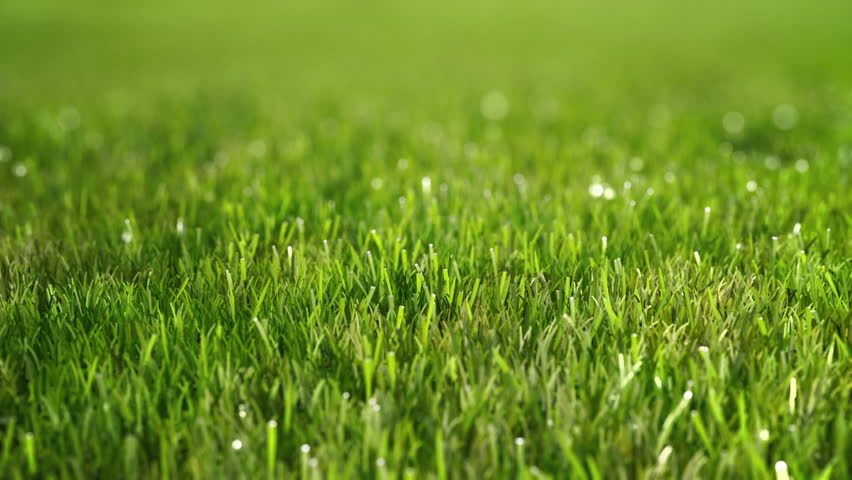 Green morning grass with dew. Slow camera fly over. Perfect Lawn. The depth of field.