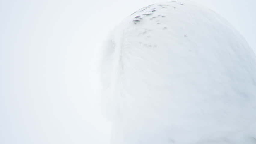 CU SELECTIVE FOCUS Portrait of snowy owl (Bubo scandiacus) against white background