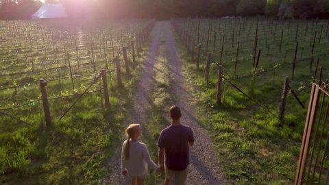 Establishing Shot, Aerial Of Couple Exploring Vineyard At Sunset, Romantic Date, Lens Flare