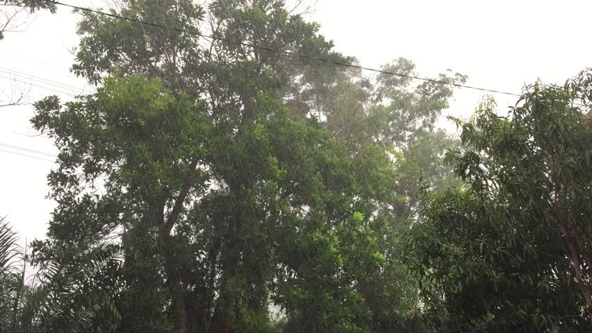 Raining season, heavy raining and wind blowing the tree  | Shutterstock HD Video #30750736