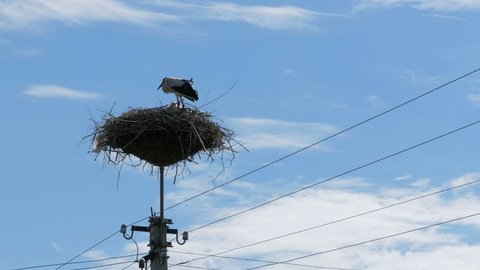 Storks Family in its nest on a pillar. Time Lapse. Stork in a Nest on a Pillar High Voltage Power Lines on Sky Background. Stork Sits on a Pole and Moving Clouds in a Blue Sky.