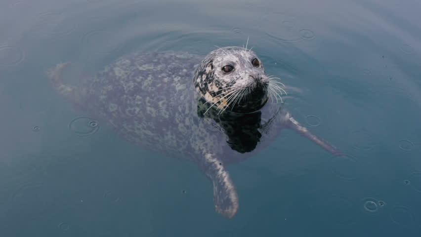 Header of seal in