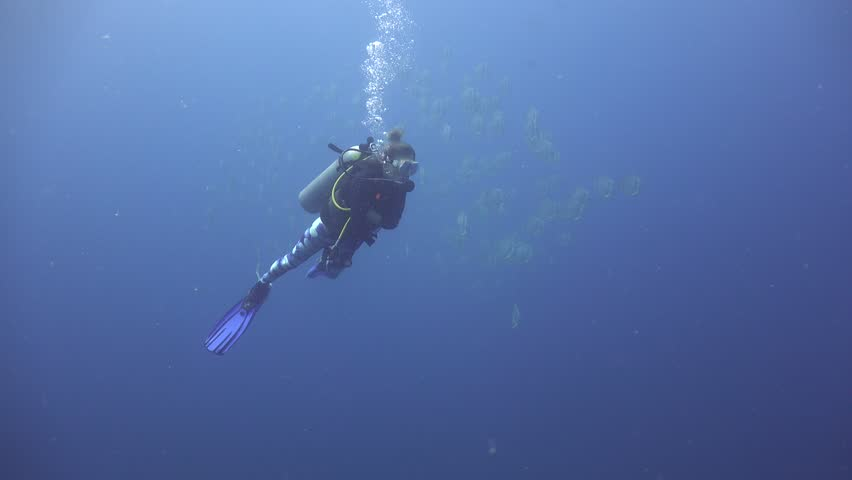 School of batfish ( Platax Teira) swims past a diver quickly Sail Rock/ Koh Phangan / Thailand   Shutterstock HD Video #31018159