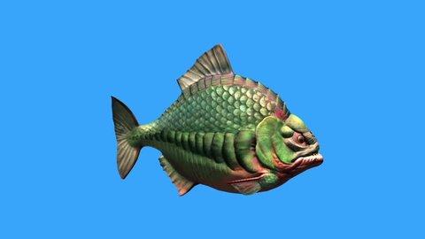 Fish Piranha Swim Blue Screen 3D Rendering Animation