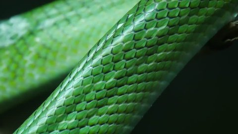 Close up skin texture green color of snake are moving