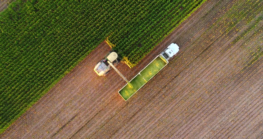 Tractors and farm machines harvesting corn in Autumn, breathtaking aerial view.  #31161616