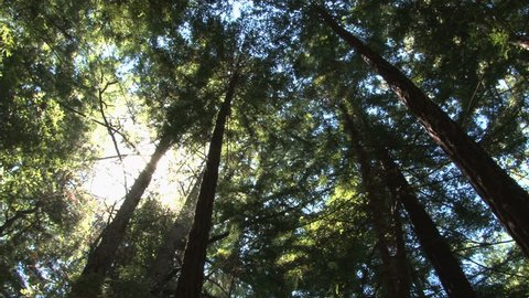 top of the redwoods slow spin