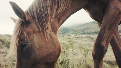 Field-kept bay horse feeds on mountain meadow. Grazing herd animals chewing grass - rural area landscape. Agricultural village - cinematic background.