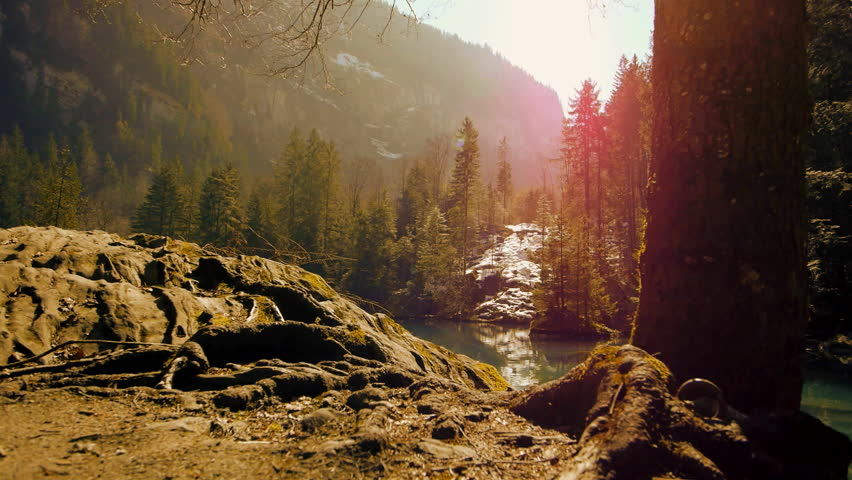 Nature resort background | Shutterstock HD Video #31239796