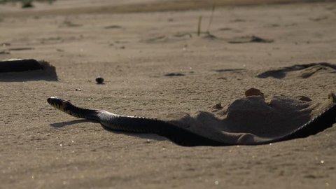 Beautiful grass snake on a beach
