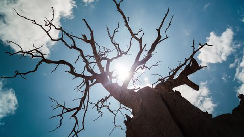 A linear and pan timelapse shooting up against a dry, dead tree with abstract branches twisting against a blue sky as the sun (flare) and clouds move through. 4K