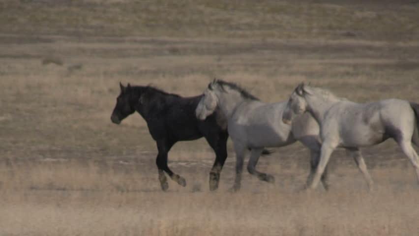 Wild Horses in the Utah Desert | Shutterstock HD Video #31340806