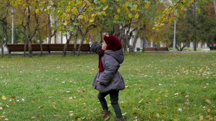 little girl collects autumn foliage in the park #31361626