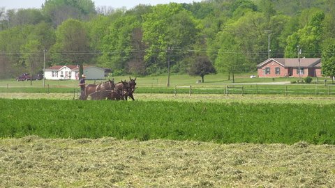 CIRCA 2010s - United States - Amish farmers use traditional horses and methods to plow their fields.