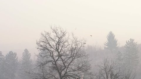 Flock of birds on a tree escapes in the fog