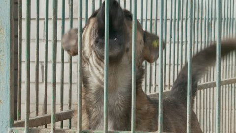 A dog in a cage in a dog nursery or shelter
