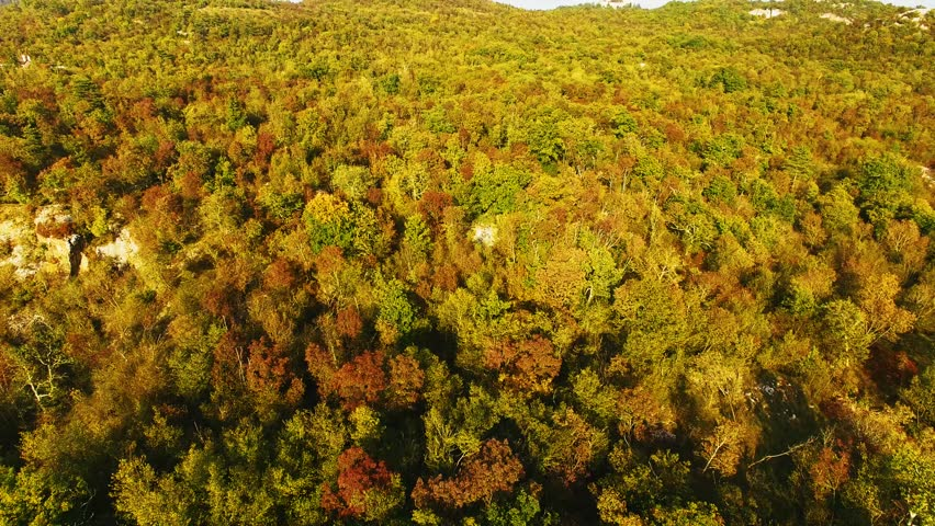 Aerial drone view of stunning colorful autumn fall forest. Drone Aerial View Concept.
