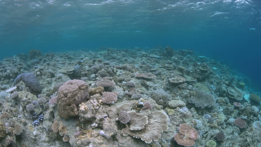 When a coral reef dies,coral bleaching is the result of water heating. Above-average seawater temperatures caused by global warming have been identified as a leading cause of coral bleaching worldwide