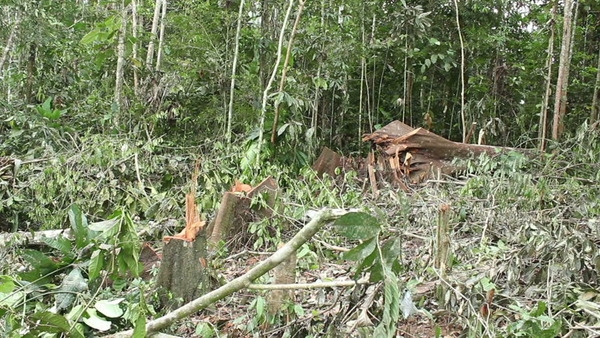 Tropical rainforest felled for slash and burn agriculture in Ecuador