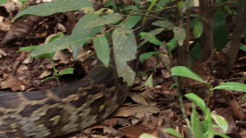 Header of python