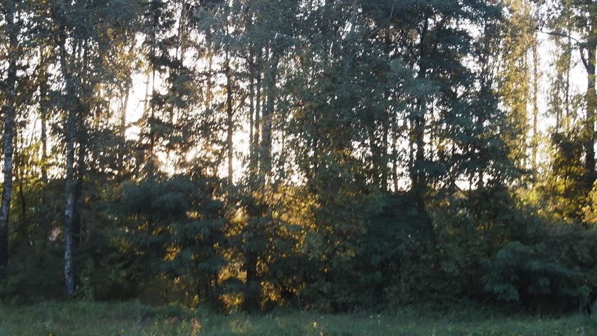 Roadside green belt from car. Setting sun flashes through trees, changing amount of light, sunlight play among branches