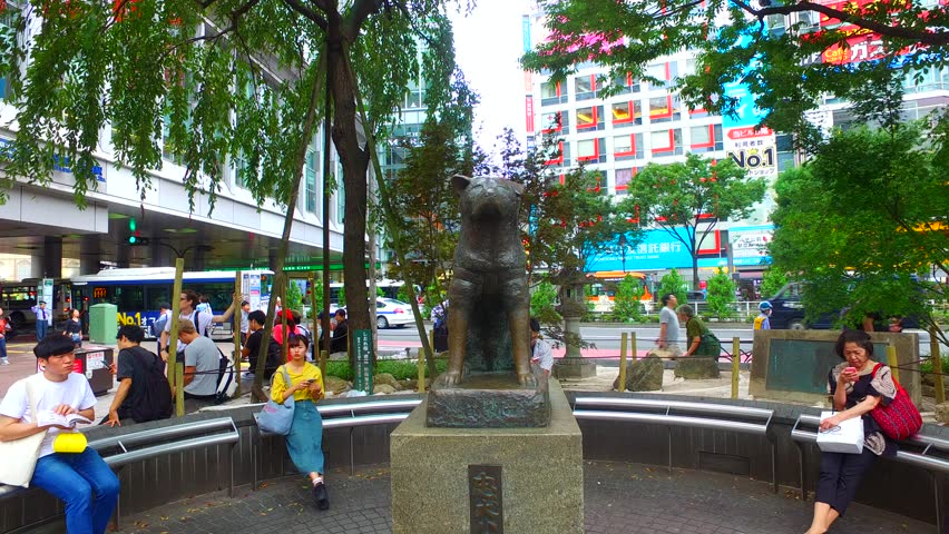 Tokyo, Japan - September 27, 2017 :Tracking shot of around dog Hachiko in Shibuya Tokyo Japan.A lot of people come and go throughout the day. | Shutterstock HD Video #31830616