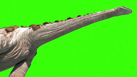 Dinosaur Titanosaur Walks Neck Green Screen 3D Rendering Animation Jurassic World