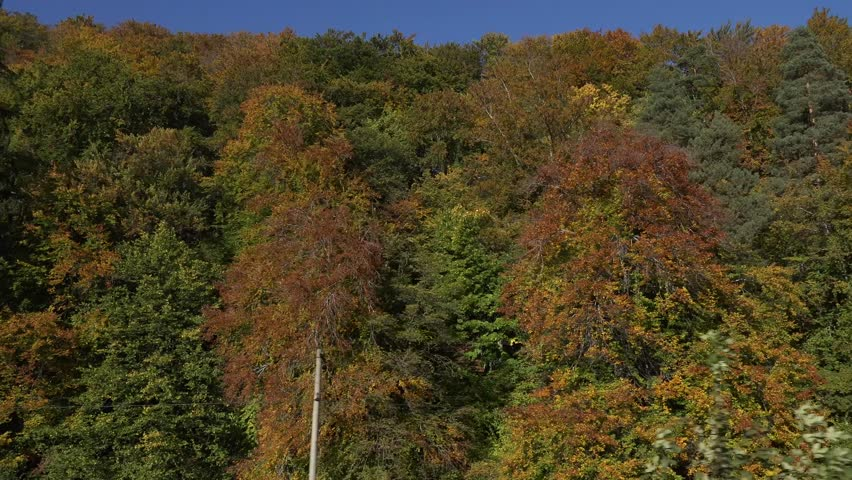 4K POV Point of view of train cross forest tree in autumn season, colorful wood by day | Shutterstock HD Video #31861126