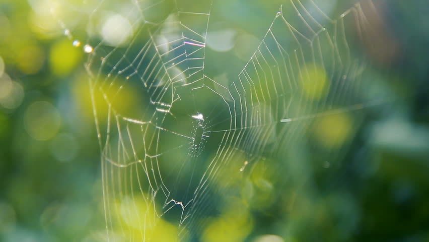 Spider's web on the branches in the garden   Shutterstock HD Video #31940773
