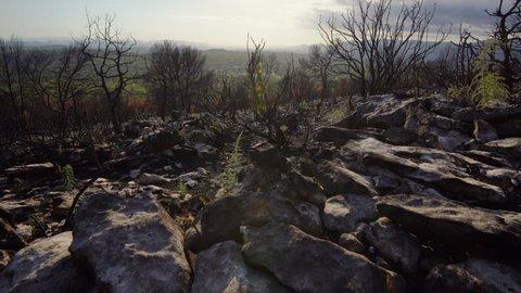 burnt landscape after fire