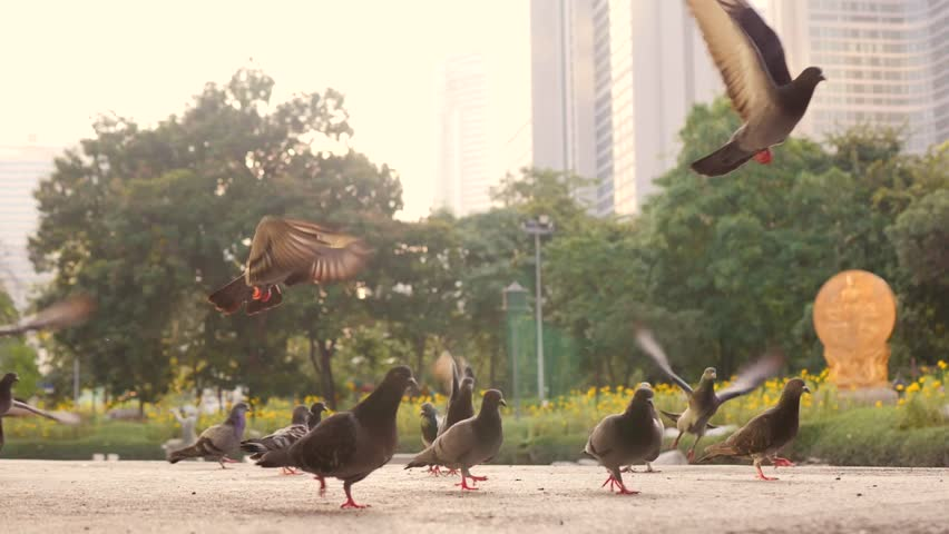 Frightened Pigeons Flying Away in City Park. HD 180p Slowmotion.
