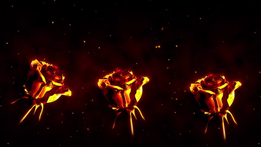 Roses on fire | Shutterstock HD Video #3245776
