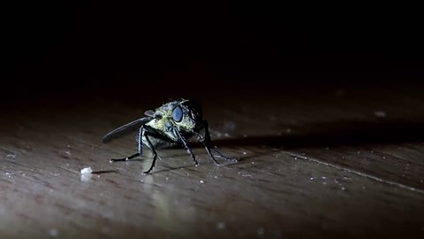 a illuminated fly sitting on the floor at night, close up view.