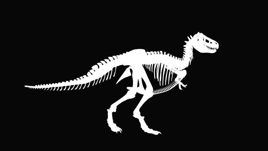 T-Rex Dinosaur silhouette against black, seamless loop