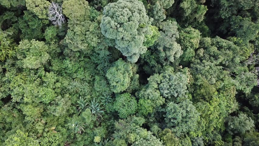 Rainforest. Aerial footage of jungle rain forest canopy