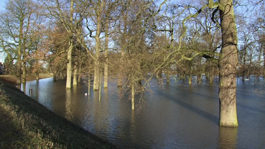 view from dike to oak trees in water, due to high water level in river IJssel, The Netherlands