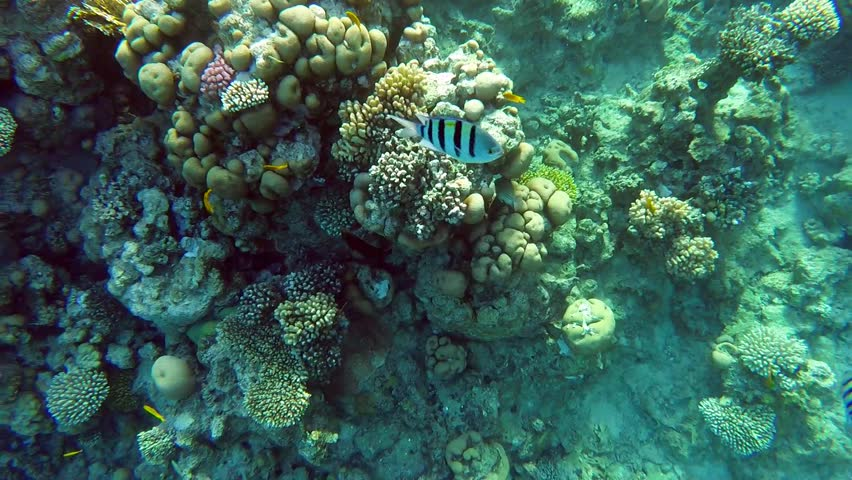 Beautiful living coral reef and swimming fishes in sea | Shutterstock HD Video #32858476
