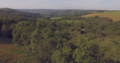 Fly over green oak and ash tree tops in rural England over the ancient woodland canopy with fields and rolling hills in the background.