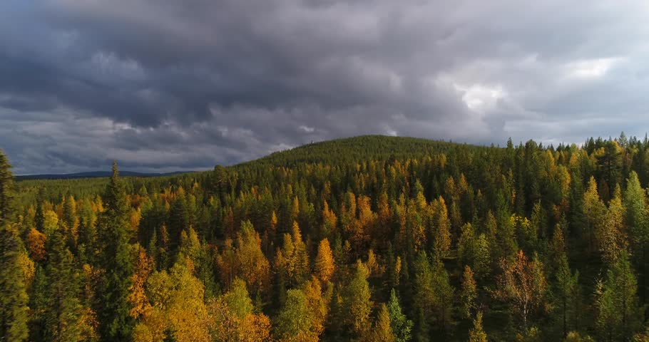 Autumn color forrest, Cinema 4k aerial rising view over colorful autumn trees, towards a tunturi fjeld mountain, on a sunny and rainy fall day, near pallas-yllas national park, Lapland, Finland