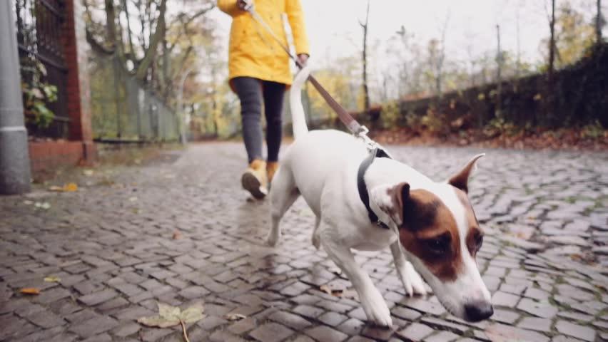 Slowmo Dog Walking
